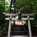 写真: 世田谷八幡宮(1)