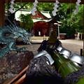 写真: 世田谷八幡宮(2)