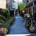 写真: 黒塀通り(2)