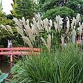 写真: 初秋の弁天池