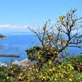 写真: 江之浦展望