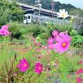 写真: 秋色沿線(1)