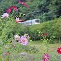 Photos: 秋色沿線(2)