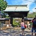 写真: 豪徳寺のYou達