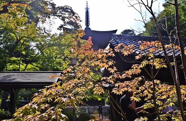 秋色三重塔