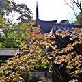写真: 秋色三重塔