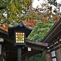 秋色灯る石灯籠