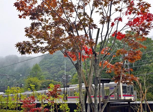 秋色沿線(6)
