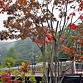 写真: 秋色沿線(6)