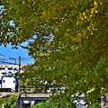 秋色沿線(9)