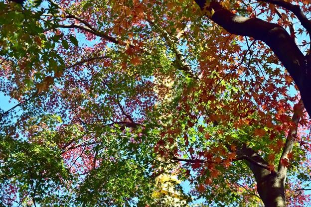 Photos: 秋のグラデーション