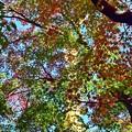 写真: 秋のグラデーション