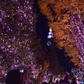 写真: 夜の街路地(2)