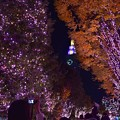 Photos: 夜の街路地(2)