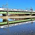 Photos: 川面の新顔(^^♪