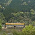 Photos: 115系幸せの黄色い電車@ネウクロ2