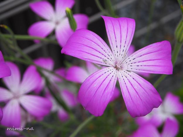写真: パッと咲く