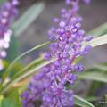 写真: 紫色の