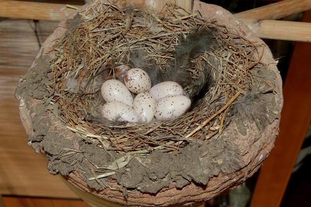 卵6個異常なし