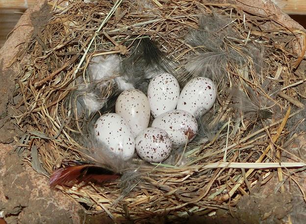 写真: 孵化はまだ