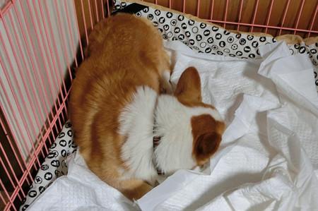 満足して寝ました