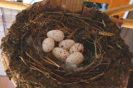 6個目の産卵