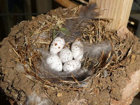 卵が5個に
