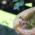写真: 水を飲みに来たハチ