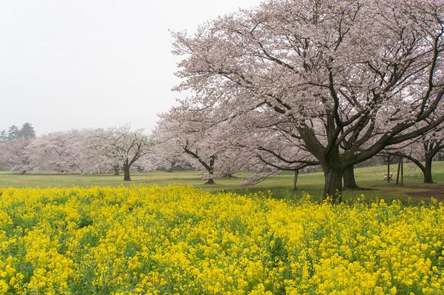 昭和記念公園【みんなの原っぱ東花畑】4
