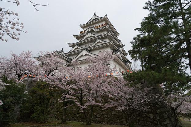 【福山城の桜】5