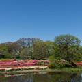 神代植物公園【つつじ園の眺め】1