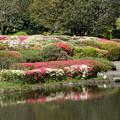 神代植物公園【つつじ園の眺め】3
