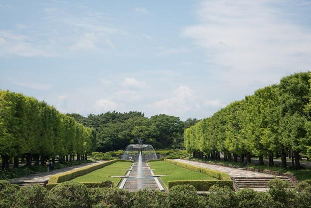 【梅雨明けの昭和記念公園】