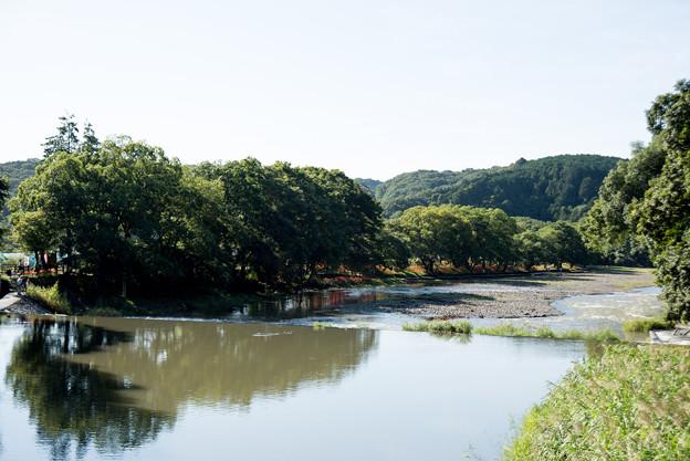 巾着田【鹿台橋からの眺め】