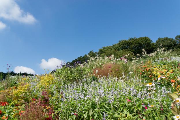 【青空と里山ガーデンの大花壇】2