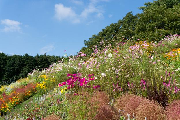【青空と里山ガーデンの大花壇】3