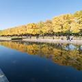 Photos: 昭和記念公園【カナールのイチョウ】3