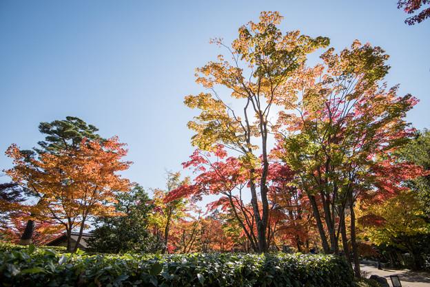 昭和記念公園【日本庭園の紅葉】2-1