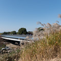 Photos: 昭和記念公園【パンパスグラス】1