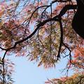 新宿御苑【タムケヤマ】2