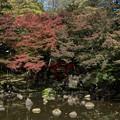 Photos: 【小石川後楽園の紅葉】2