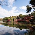 薬師池公園【薬師池の紅葉】2