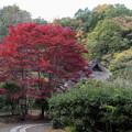 薬師池公園【旧荻野家の景色】3