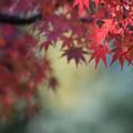 ささぶねの小路【紅葉】1-3