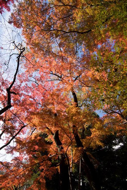 小石川後楽園【小盧山付近の紅葉】2