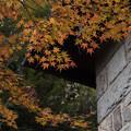 旧古河庭園【日本風の庭園】4