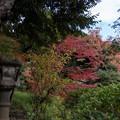 旧古河庭園【日本風の庭園】7