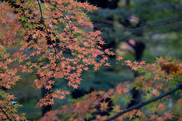 新宿御苑【下の池の紅葉】4
