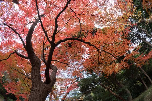 新宿御苑【上の池あたりの紅葉】3