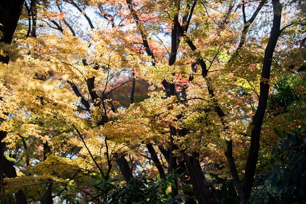 新宿御苑【下の池付近の紅葉】3